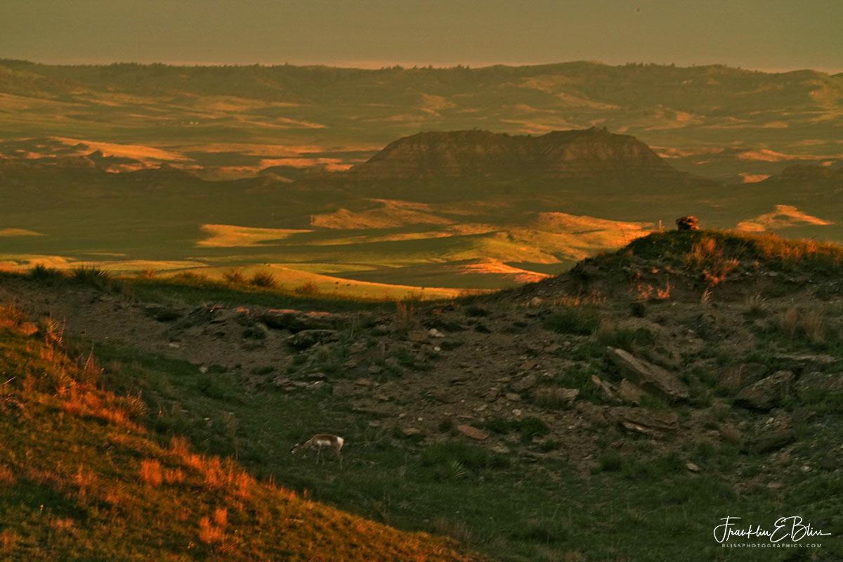 Pronghorn on Rattle Snake Ridge