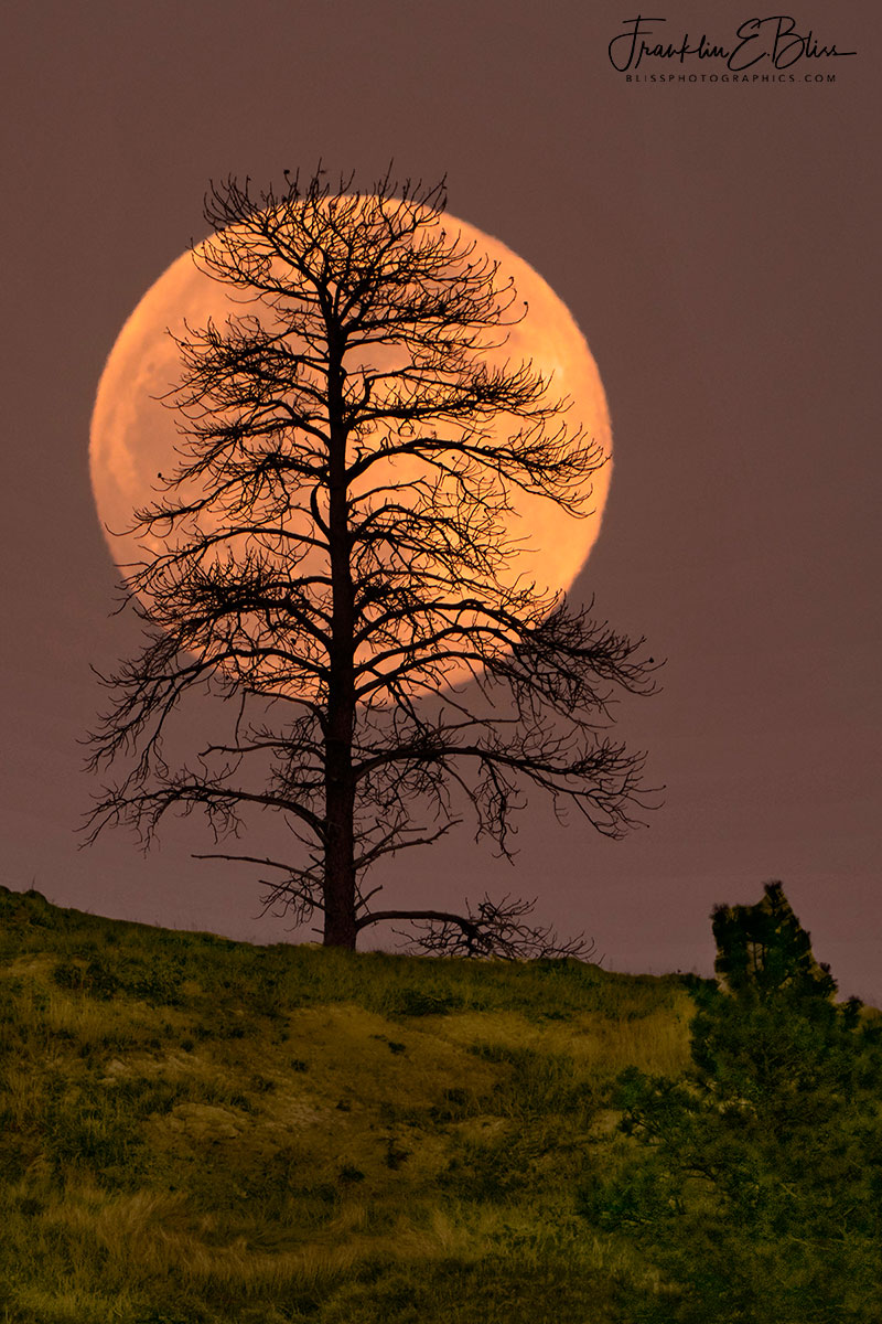 Lone Tree Moon Silhouette