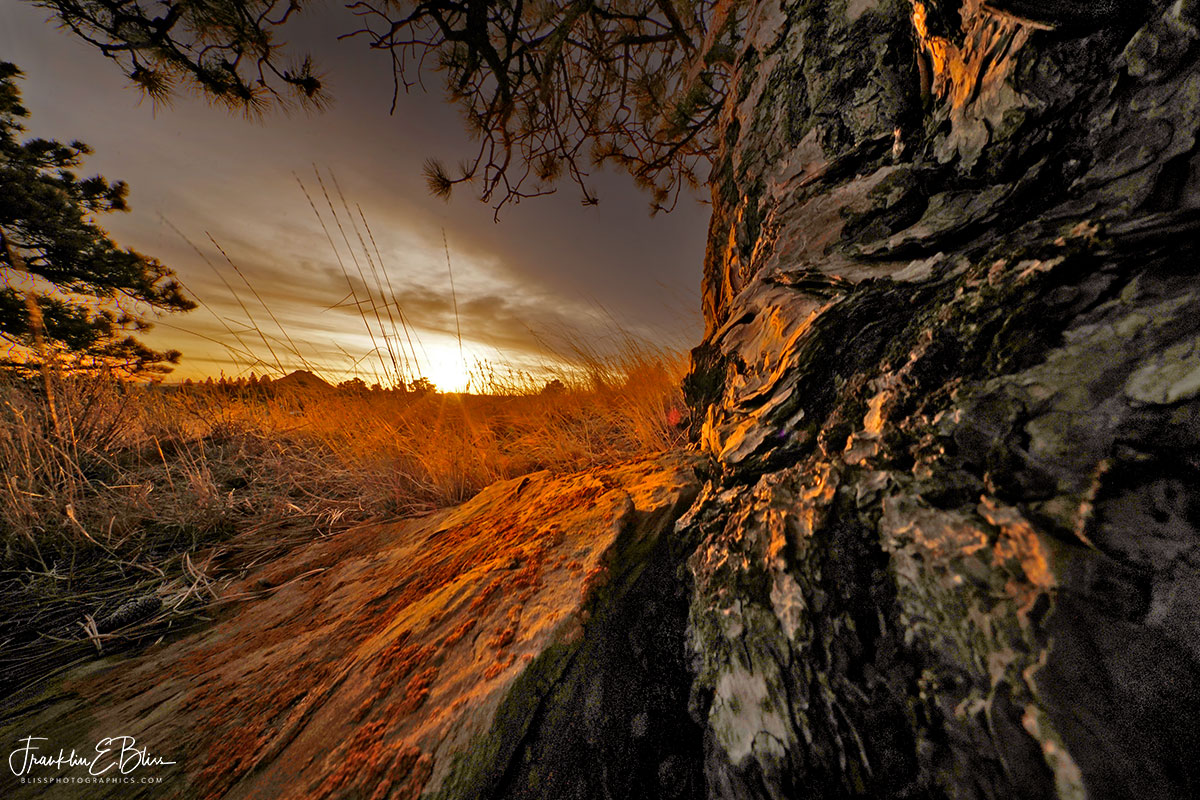 Perspective Bark Lichen Sunrise