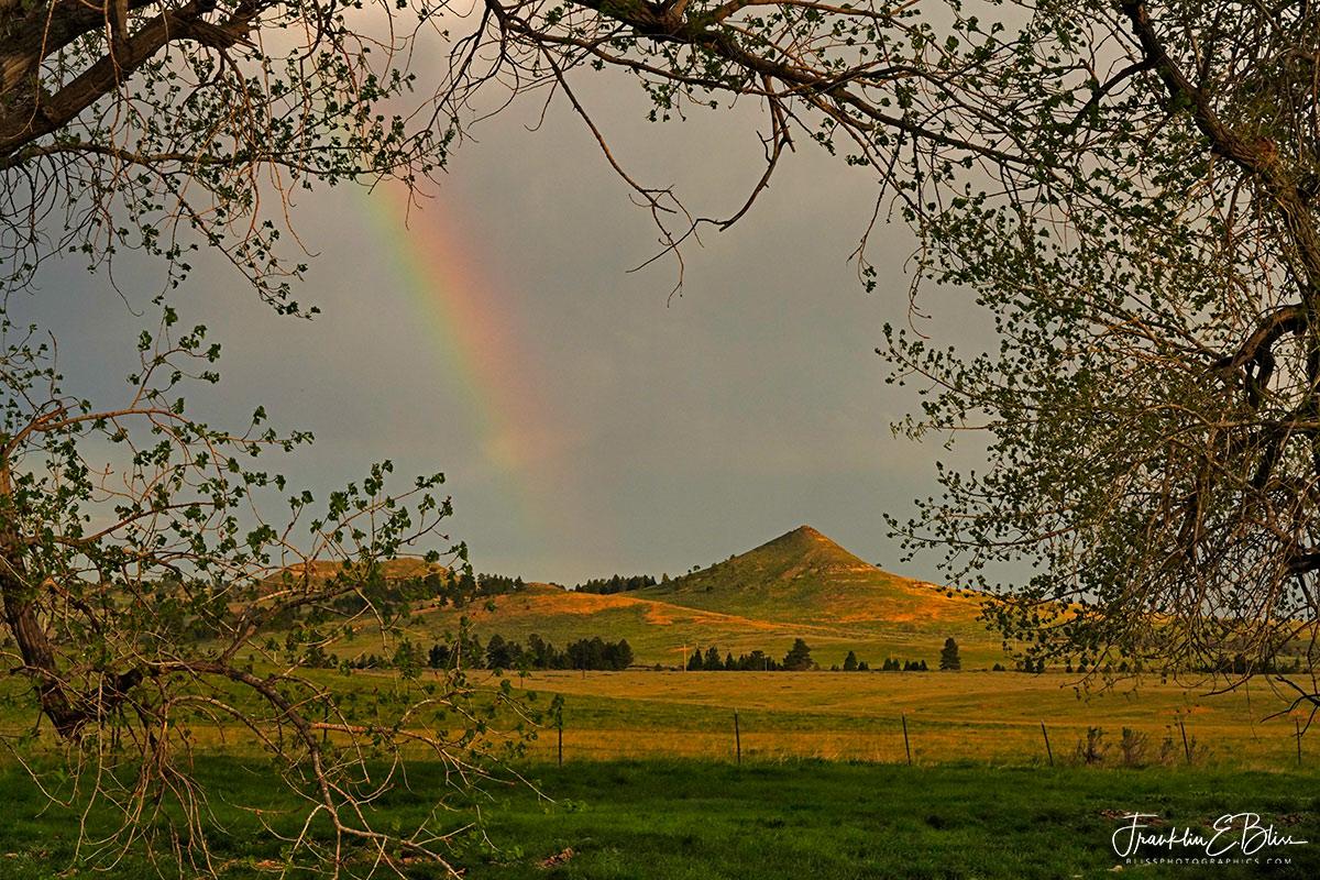 Mitten Rainbow Tree Frame