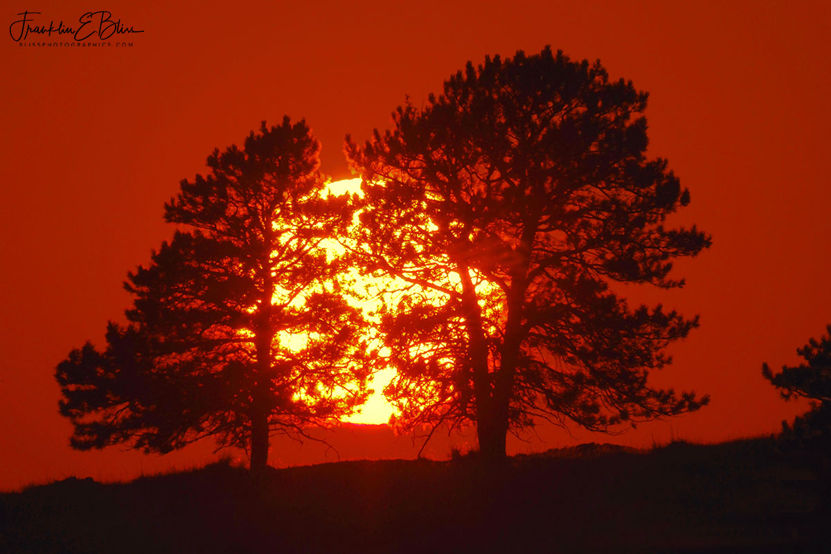 Two Trees Trapping the Sun
