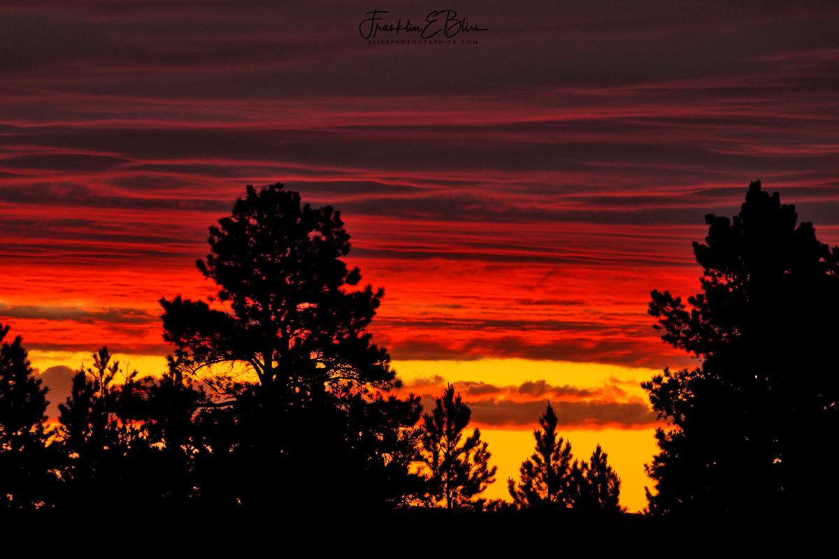 Crimson Silhouette Pine Ridge
