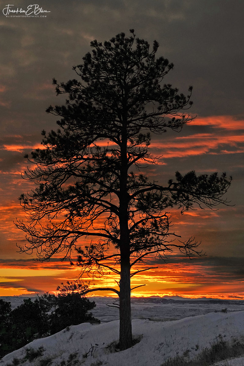 Sunset Behind Lone Tree
