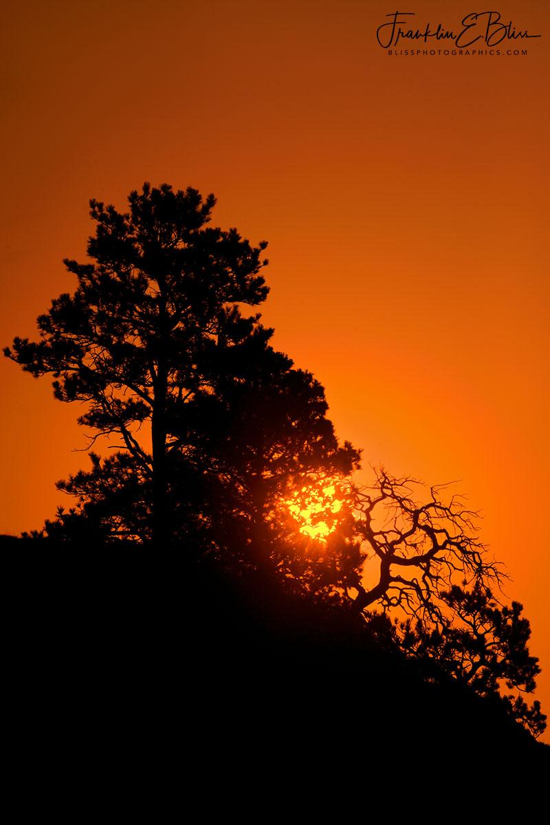 Smokey Sunrise Tree Filters