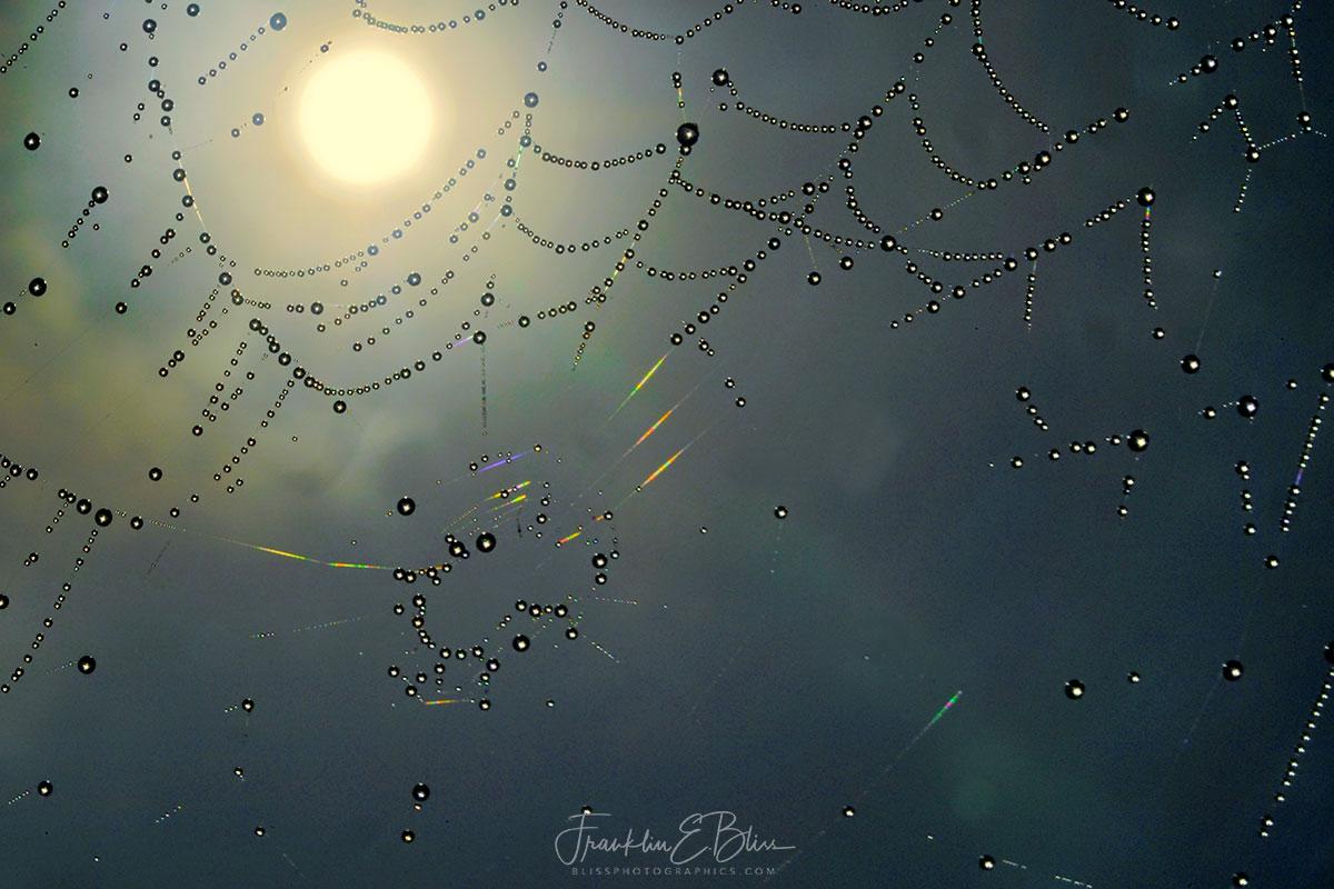 Spider Web Sky Filter