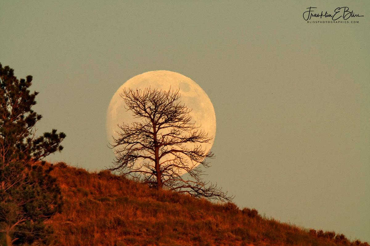 Lone Tree Moonlight Filter