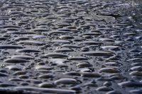 Rain Drop Perspective on Black 063020F