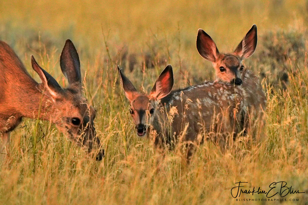 Deer Nuclear Family Twins