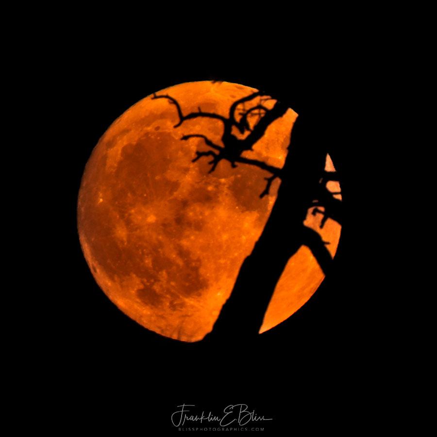 Hide and Seek Moon Style
