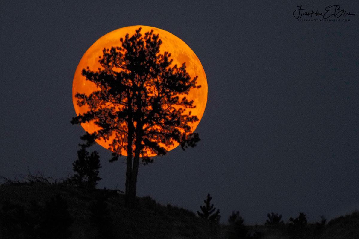 Moon Lone Tree Silhouette