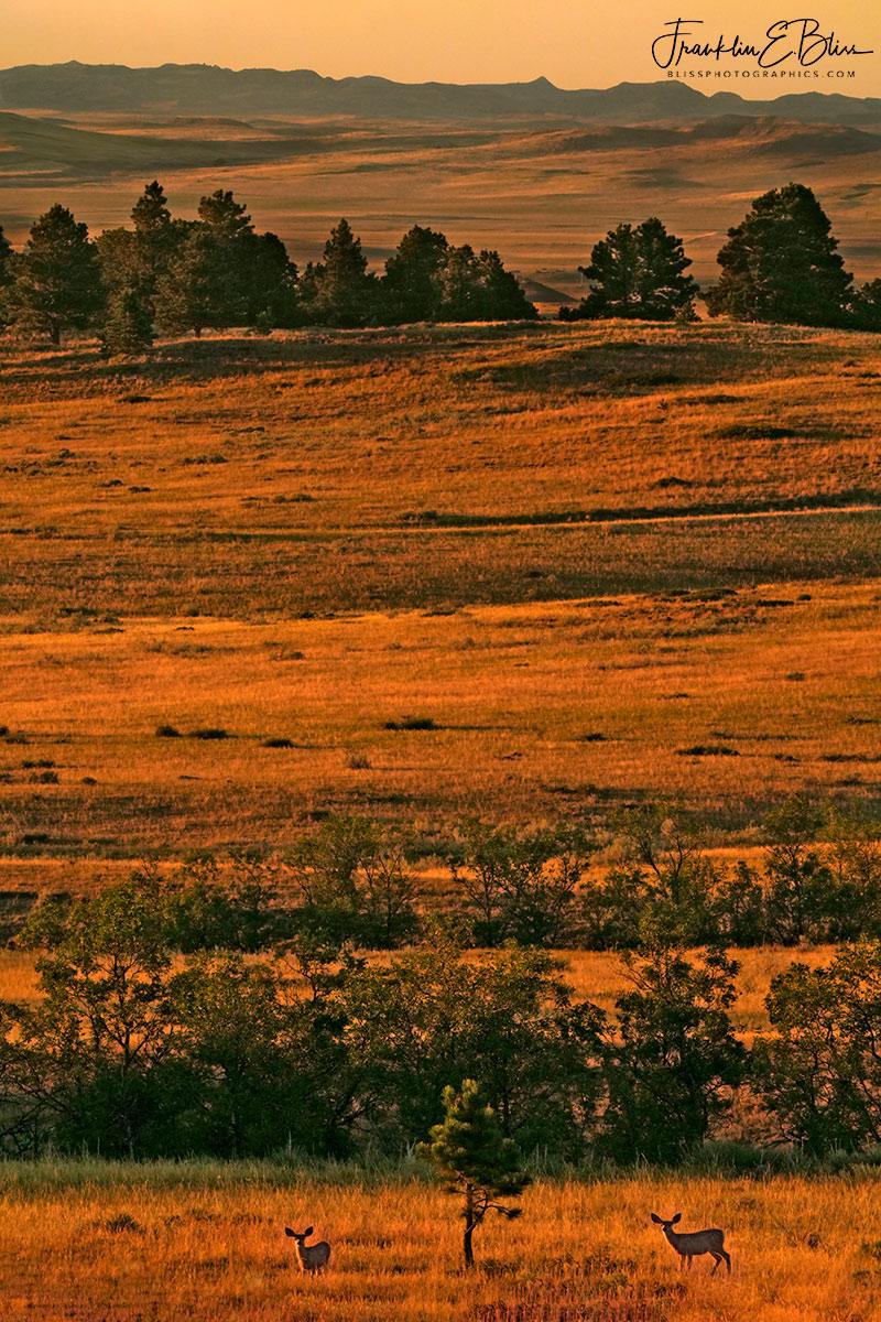 Wyotana Landscape Golden Hour