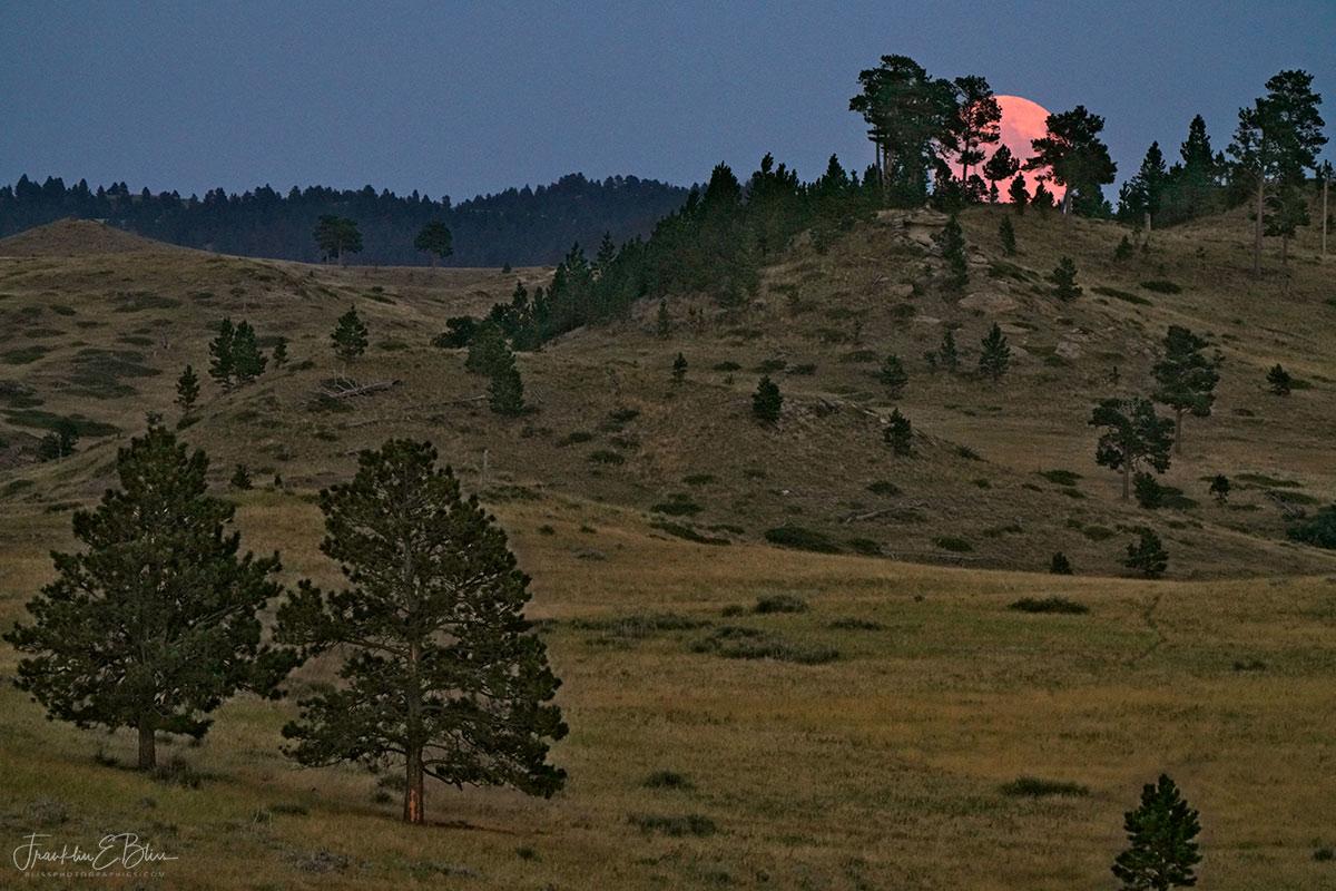 Pink Rising Sturgeon Moon