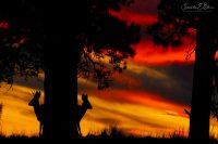 Deer Hide and Seek  090720D