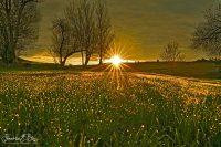 Dewey Backyard Crack of Dawn 092320A