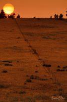Fall Equinox Fence Line 091420B
