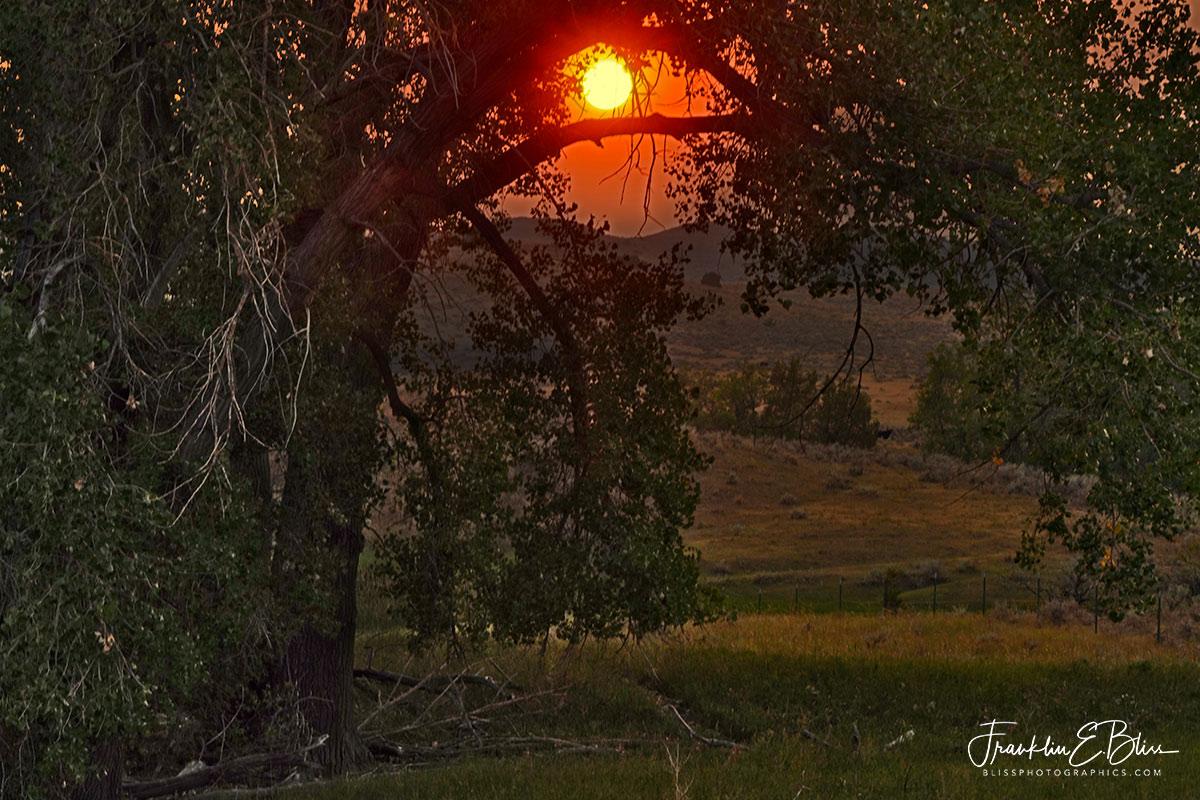 Smokey Sunset Through Cottonwoods