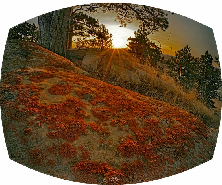 Lichen on Boulders 2 122820A