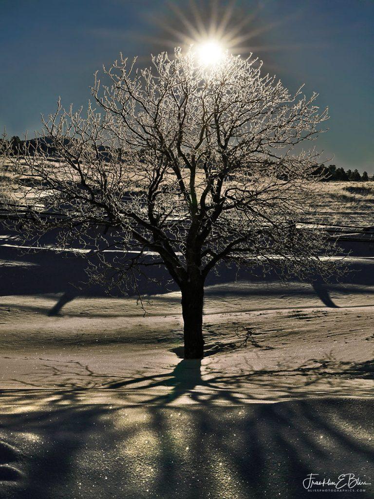 Buckeye Tree of Life 012721A