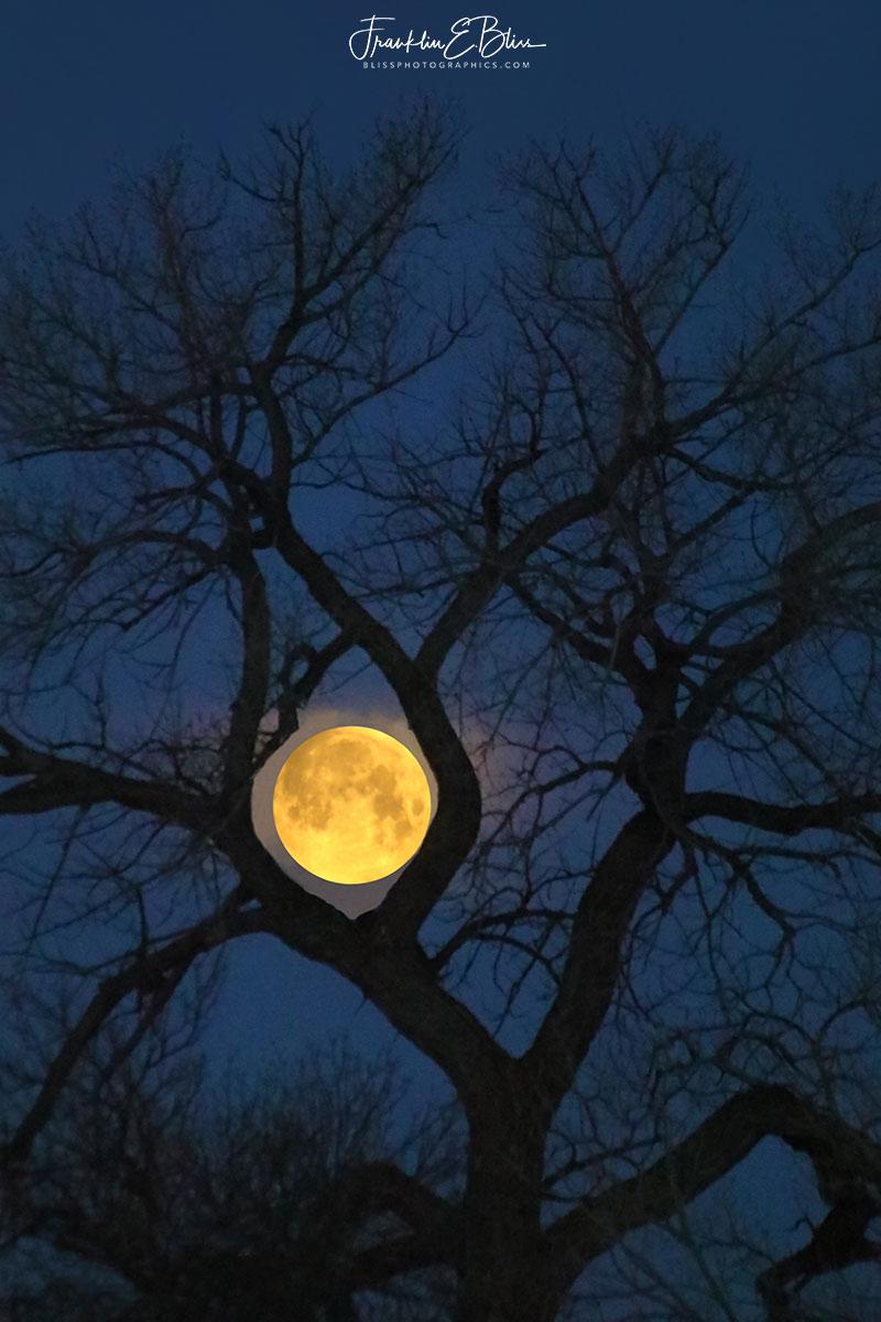 Big Moon Ent Trap